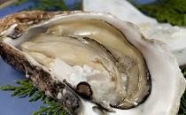 春の味覚(岩牡蠣)