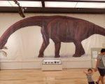 恐竜研究振興会
